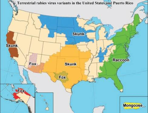 Rabies - Map of rate of rabies in the us